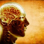 Resveratrol Shown To Improve Memory And Brain Function